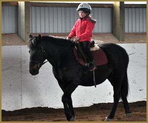 School Horse - Belle