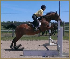 School Horse - George