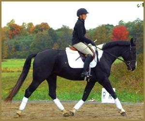School Horse - Tux